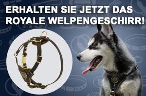 Hundegeschirr aus Leder elegant