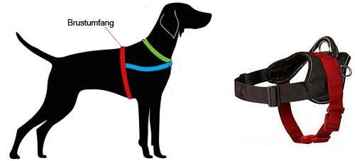 H6 messen Sie Ihren Hund ab