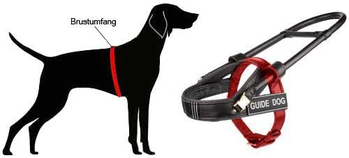 H20 mesen Sie Ihren Hund ab