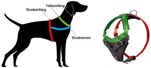 H1 messen Sie Ihren Hund ab