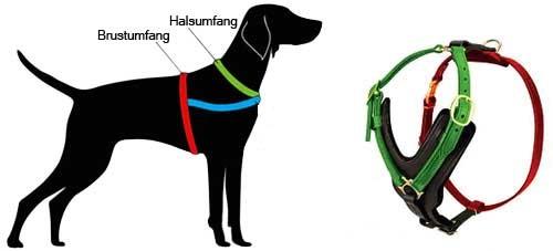 H10 messen Sie Ihren Hund ab
