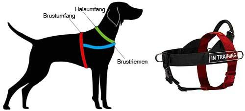 H17 messen Sie Ihren Hund ab