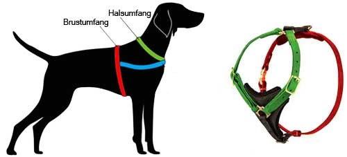 H3 messen Sie Ihren Hund ab