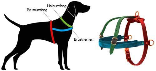 H5 messen Sie Ihren Hund ab