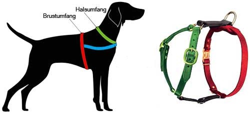 H7 messen Sie Ihren Hund ab