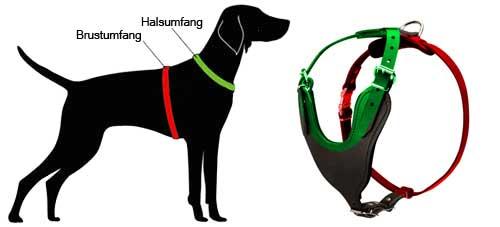 H8 messen Sie Ihren Hund ab