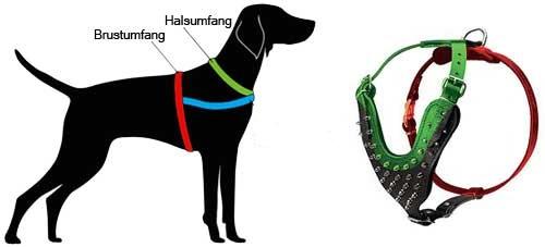 H9 messen Sie Ihren Hund ab