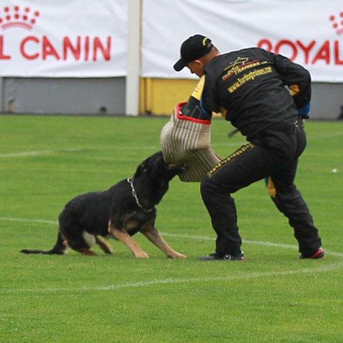 Wettkampf im Schutzhund