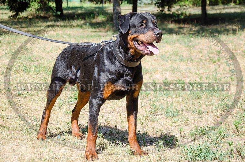 Super Dog Training Frankfort