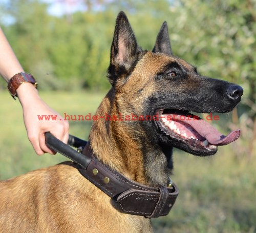 halsband aus leder mit schlaufe f r belgischen malinois c33 1054 hundehalsband aus zwei. Black Bedroom Furniture Sets. Home Design Ideas