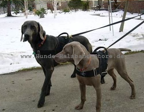 winter spiele f r die hunde hundehalsband leder breit. Black Bedroom Furniture Sets. Home Design Ideas