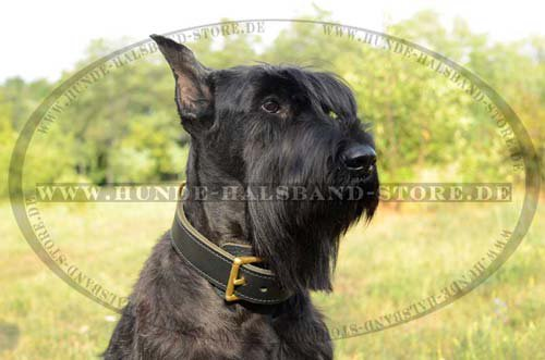Double Thick Leather Dog Collar
