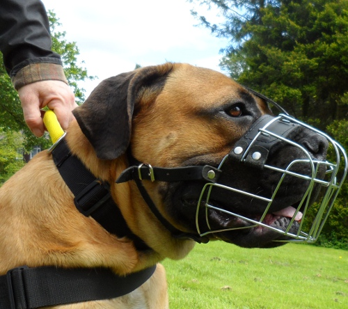 bequemes Nylon Halsband fuer Boerboel